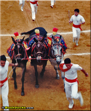 Corrida de toros - the bullfight in Burgos